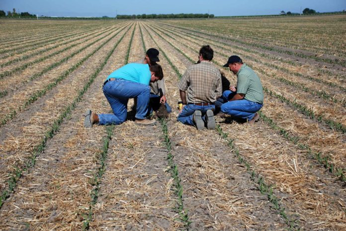 Farmers and consultants examining crop residue