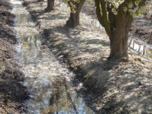 Integrating Key Water Management Information to Better Manage Irrigation