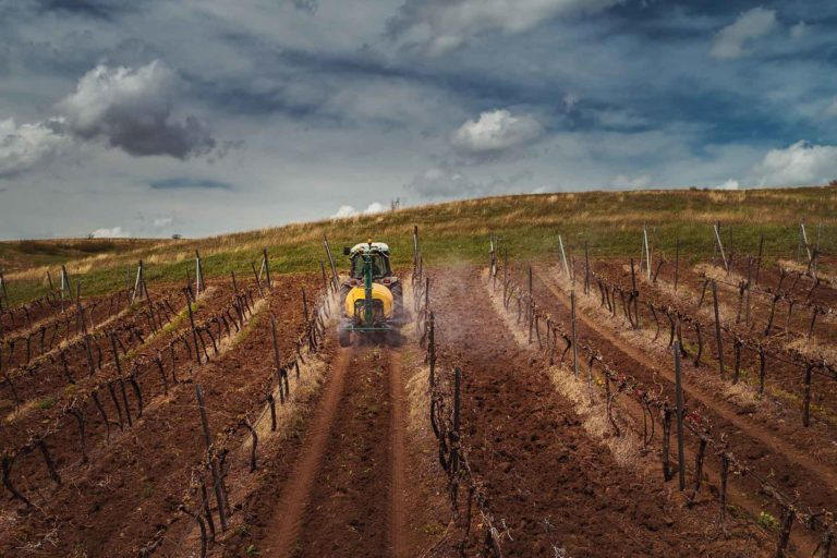 Weed Management in Vineyards