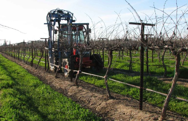 Mechanized Vineyard—Is it the Wave of the Future?