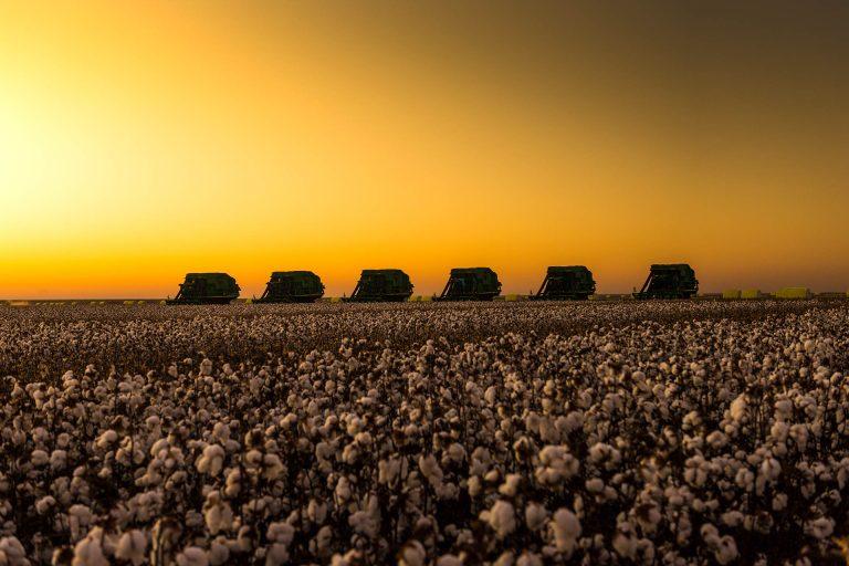 Maintaining Fusarium Wilt Race 4 (FOV4) Resistance/Tolerance of Cotton