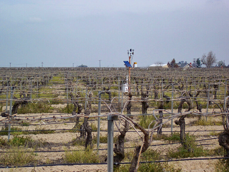Weather Station use in Vineyards