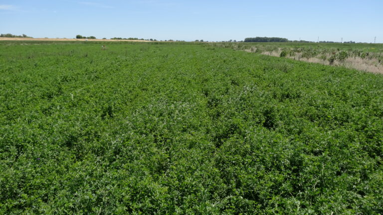 Pre-Plant Weed Management Followed by In-Season Control FOR Improved Alfalfa Stand and Yield