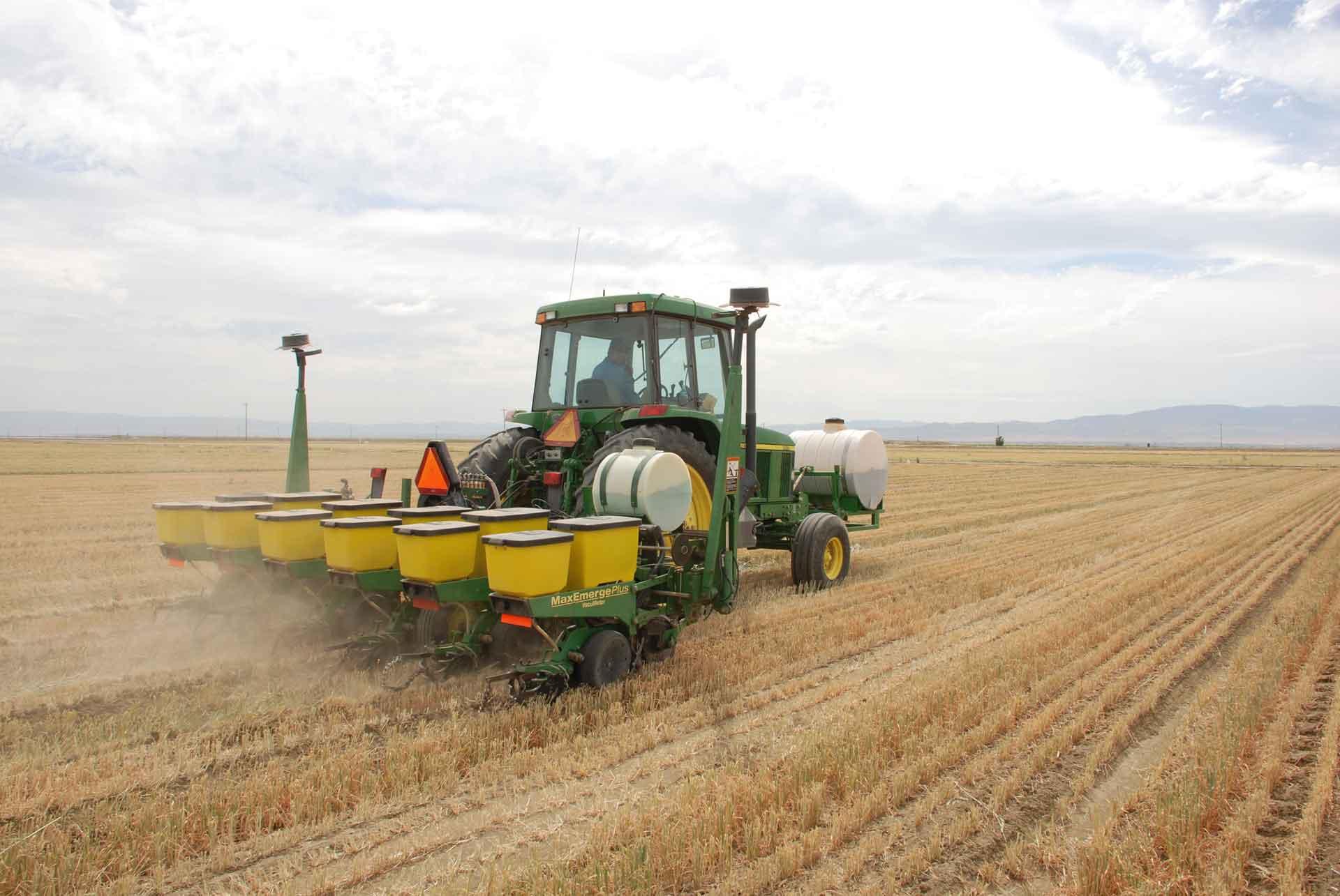 Direct seeding corn into wheat stubble