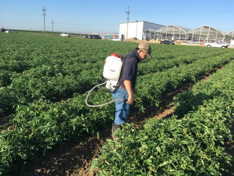 Vegetable Growers Express Impressions, Concerns and Hope for Crop Biostimulants