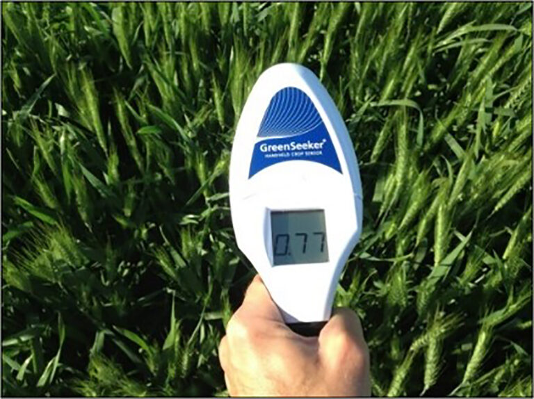 Using N-Rich Reference Zones to Inform In-Season Nitrogen Fertilization Practices in California Small Grains