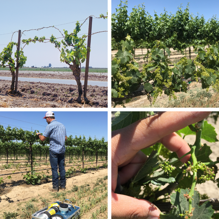Vineyard Water Management During Drought Years