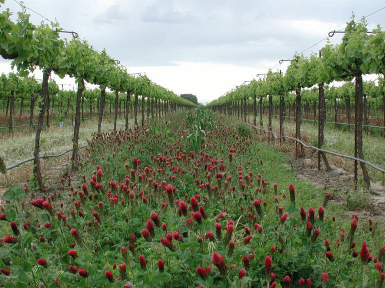 LODI RULES for Sustainable Winegrowing: A Quality Winegrape Program